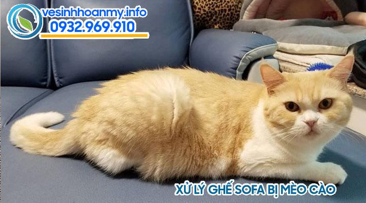 Bảo dưỡng ghế sofa da cần phải tránh cho mèo lên ngịch
