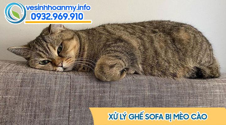 Cách xử lý mèo cào ghế sofa